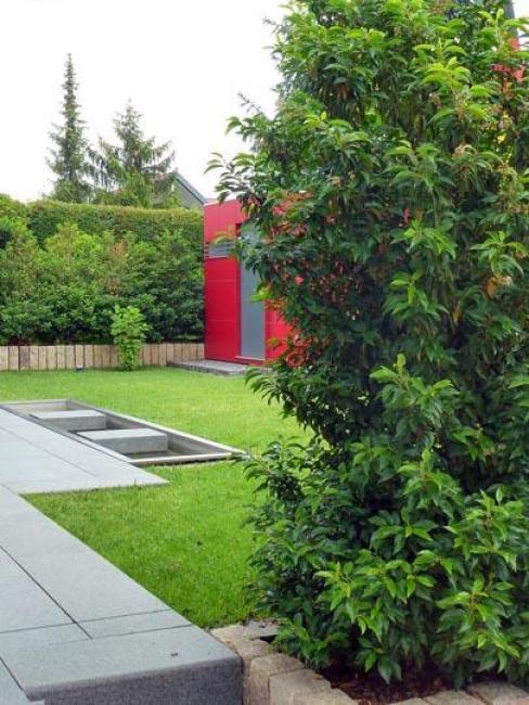 portugiesischer kirschlorbeer. Black Bedroom Furniture Sets. Home Design Ideas